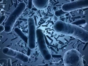Mundgeruch durch Bakterien